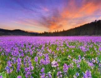 Sierra Meadows & Ponderosa